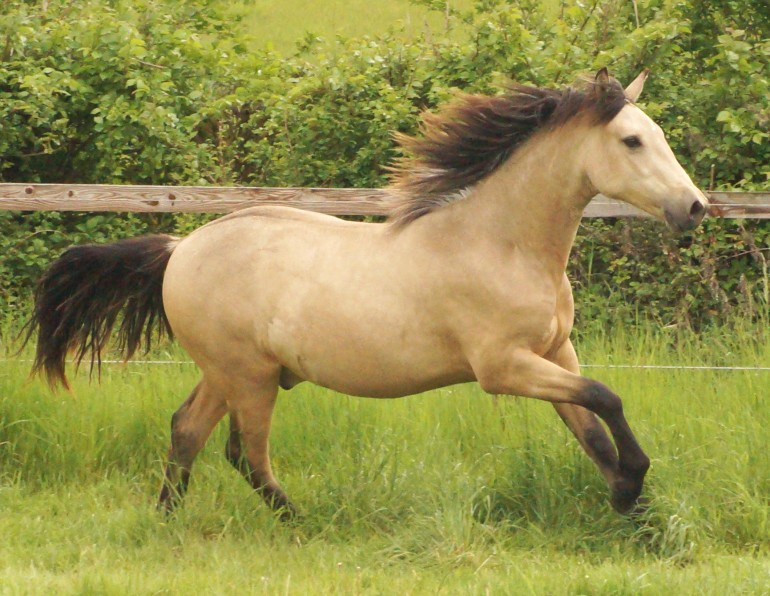 Youngstock Horses for sale in Suffolk - Horse & Hound