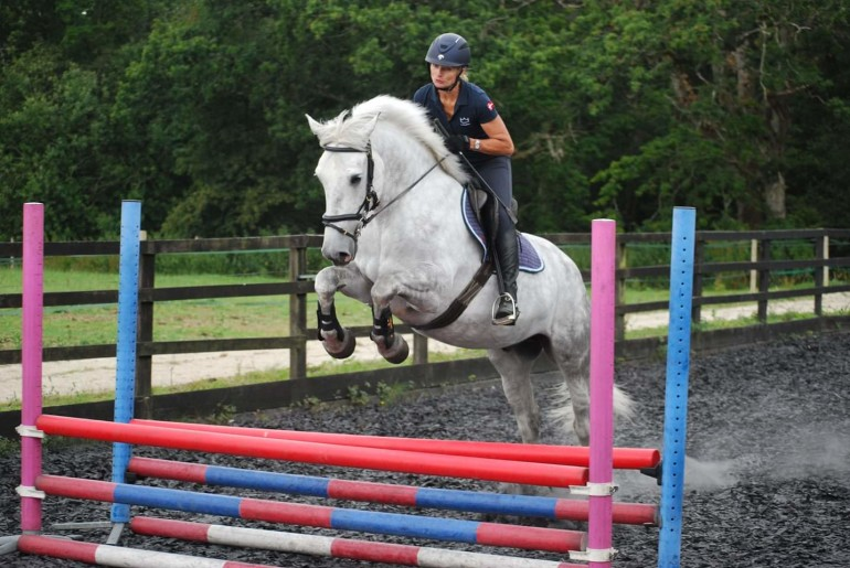 irish sports horses for sale west sussex