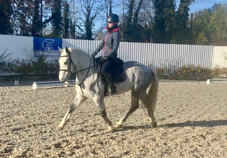Shadow - excellent showjumping potential!