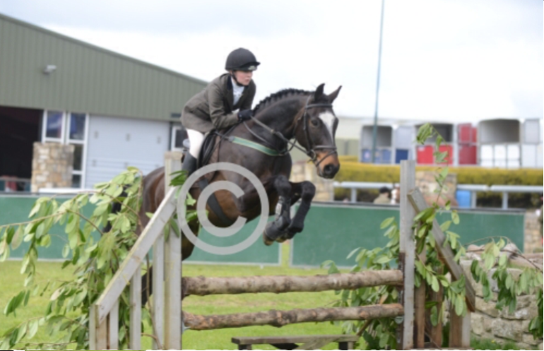 16.2hh eventer/hunter