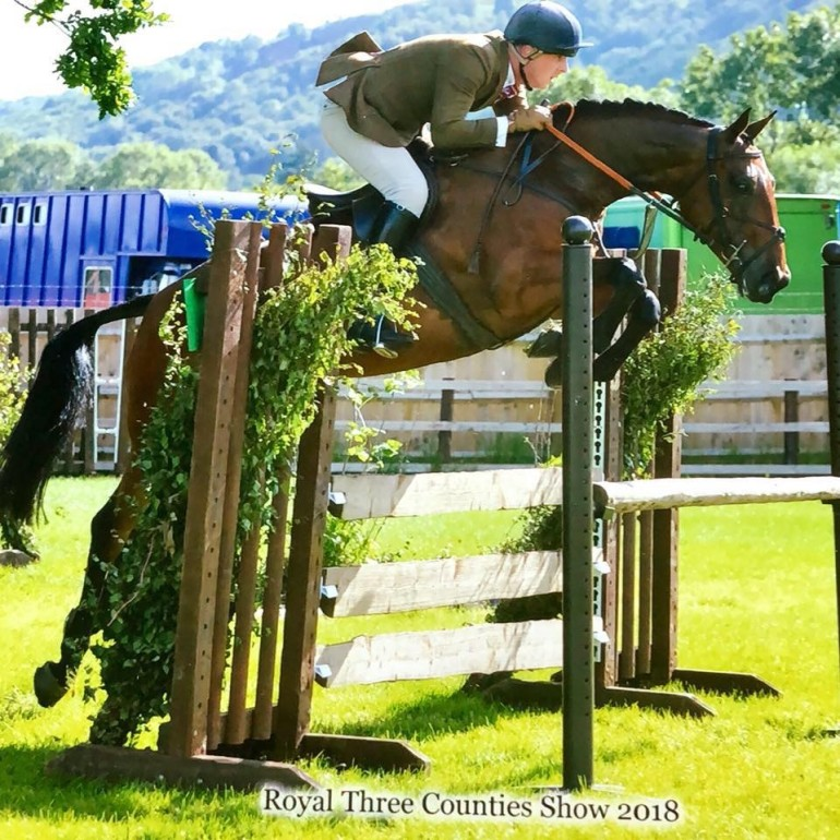 Talented Show Jumper / Eventer