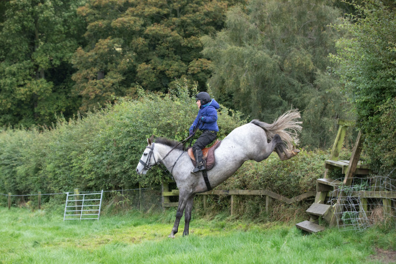Perfect Hunting Pony