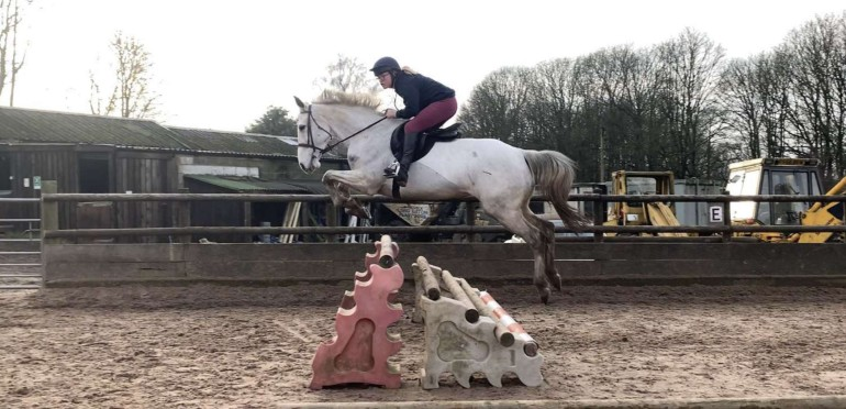 16hh allrounder