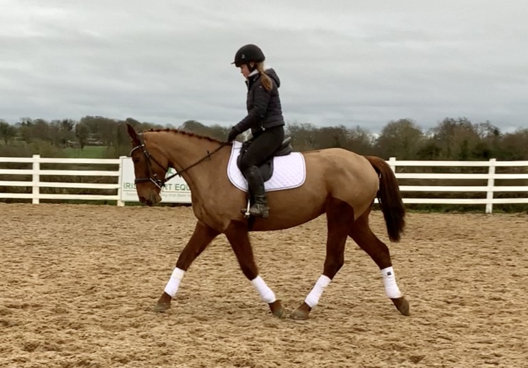 Summer - talented jumping mare!