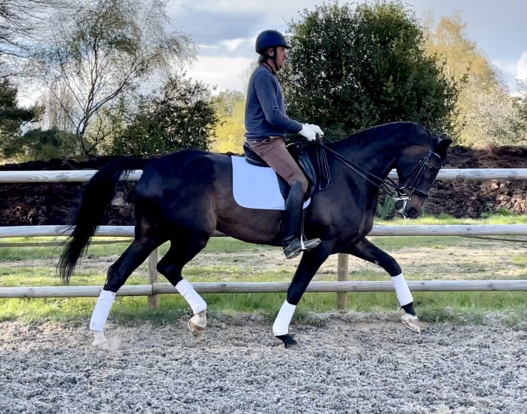 Head-turning Dressage horse