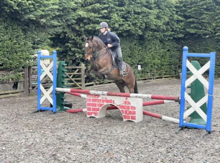 Super fun, genuine, snaffle mouthed pony club all rounder